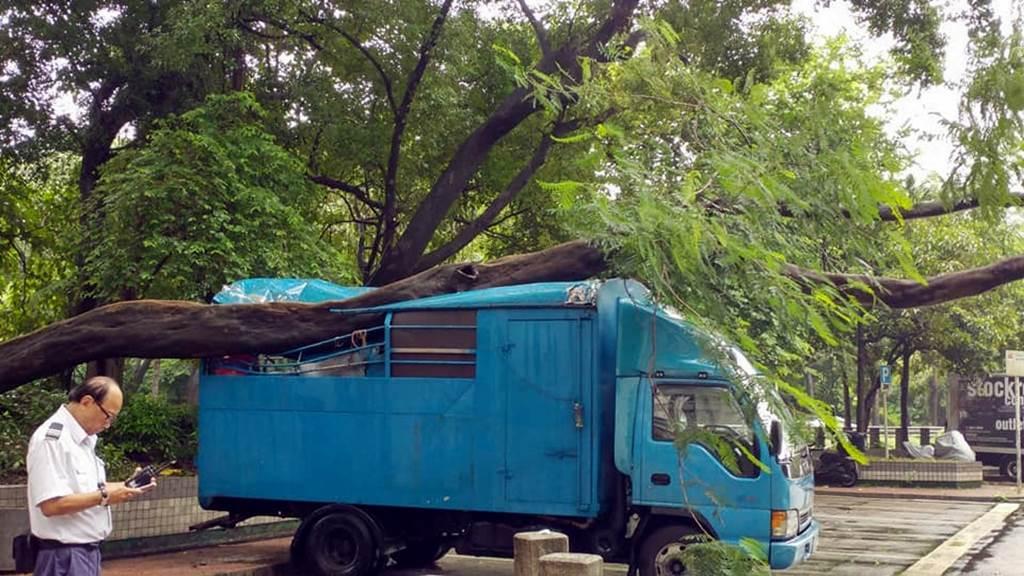 Sebuah pohon besar di kawasan Yu Ping House Long Ping Estate Yuen Long tumbang mengenai kendaraan yang parkir dibawahnya (foto HK01)