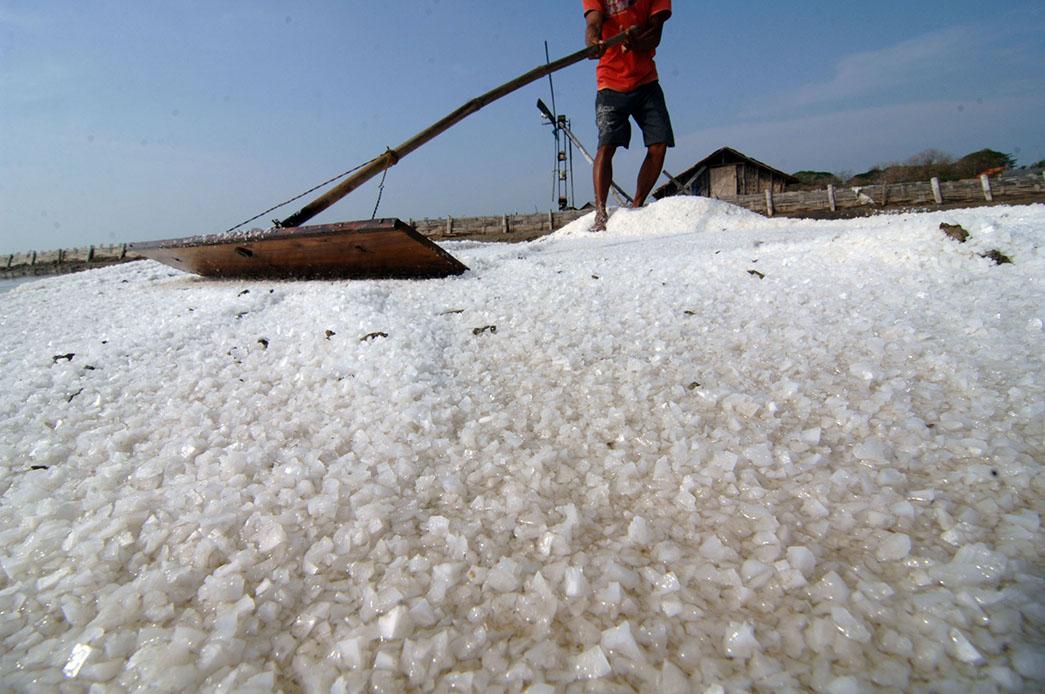 Petani memanen garam di Pamekasan, Madura, Jawa Timur, Sabtu (8/8). Petani garam rakyat berharap pemerintah agar tidak memberikan kemudahan perizinan kepada pengusaha untuk mengimpor garam sehingga produksi garam rakyat pada musim tahun ini terserap sepenuhnya. ANTARA FOTO/Saiful Bahri/aww/15.