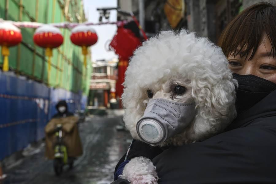 Ilustrasi Anjing peliharaan di Tai Hang Hong Kong terinfeksi corona (Foto Market Watch)