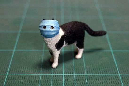 Feature Image Setelah Anjing, Kini Virus Corona Juga Menginfeksi Kucing Milik Warga Hong Kong (Ilustrasi Istimewa)